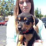 A little Rottweiler puppy who just got vaccinated in Turlock CA by dogandcatshots.com