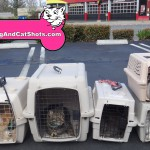 14-Antioch-Cats-dog-and-cat-shots