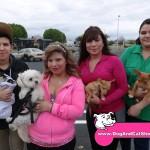 20-Ceres-Chihuahua-Chico-MaltiPoo-Bijou-Freida-Keith-dog-and-cat-shots