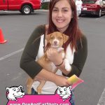 25-Merced-Red-Nose-Pit-Puppy-Hazel-dog-and-cat-shots