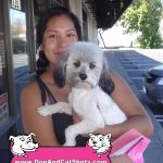 19-Antioch,-Poodle,-Pookie-dog-and-cat-shots