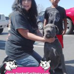 22-Fairfield-Suisun-Cane-Corso-Capone-dog-and-cat-shots