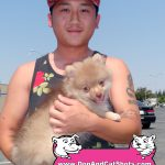 23-West-Sacramento,-Pomeranian,-Chubby-dog-and-cat-shots
