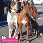 22-ceres-blue-tick-and-red-bone-walker-nelly-and-rosie