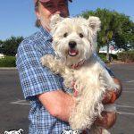 25-dixon-west-highland-terrier-westie-fripouille
