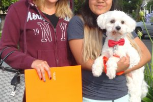We Saw Chase The Maltese At Our Lodi Clinic