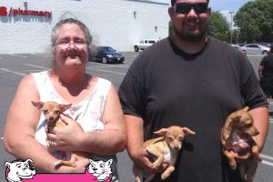 Francis, Butterfly, and Miscita Are Three Chihuahuas We Saw At Our Turlock Vaccination Clinic
