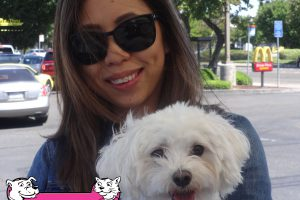 Taro is a Maltipoo Who Visited Us In Modesto