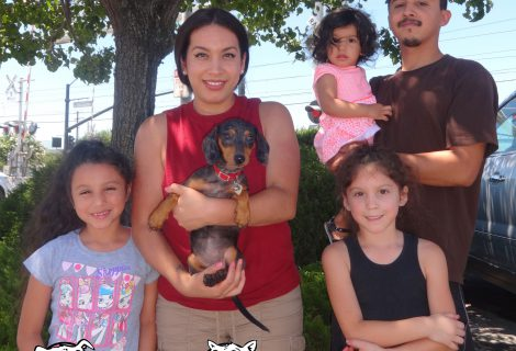 Evie the Doxie Brought Her Whole Family To Our Rancho Clinic
