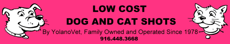 Low Cost Dog and Cat Shots in Northern California