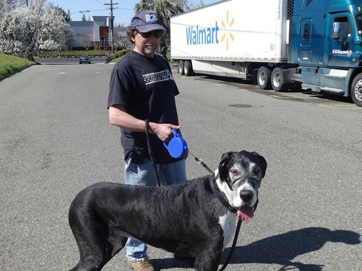 Great Dane vaccinated Pittsburg CA