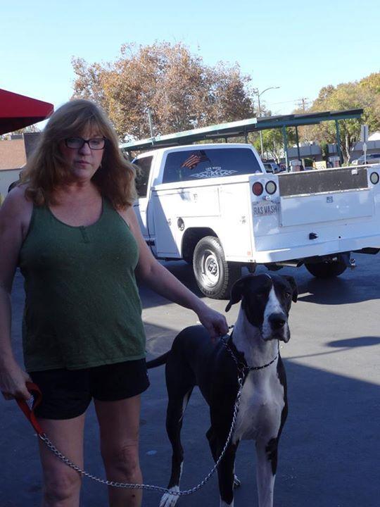 Great Dane gets shots Carmichael CA