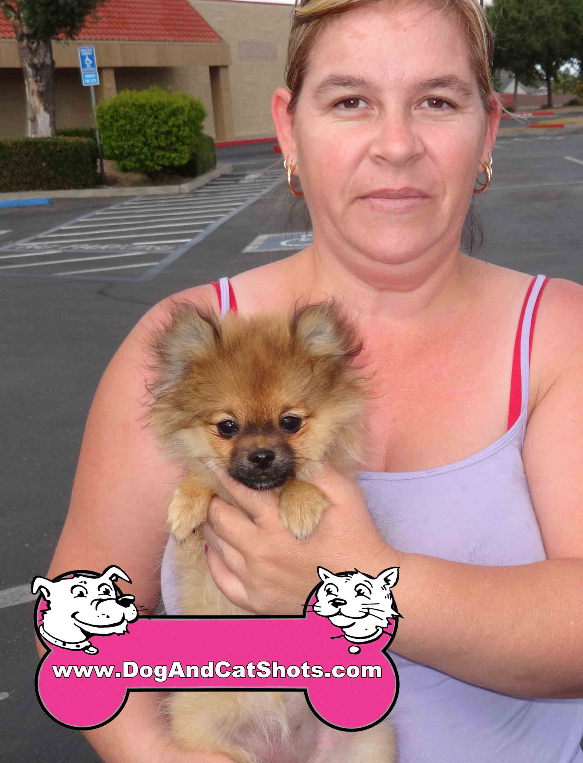 pomeranian and cats low cost dog and cat shots in northern california we met 248