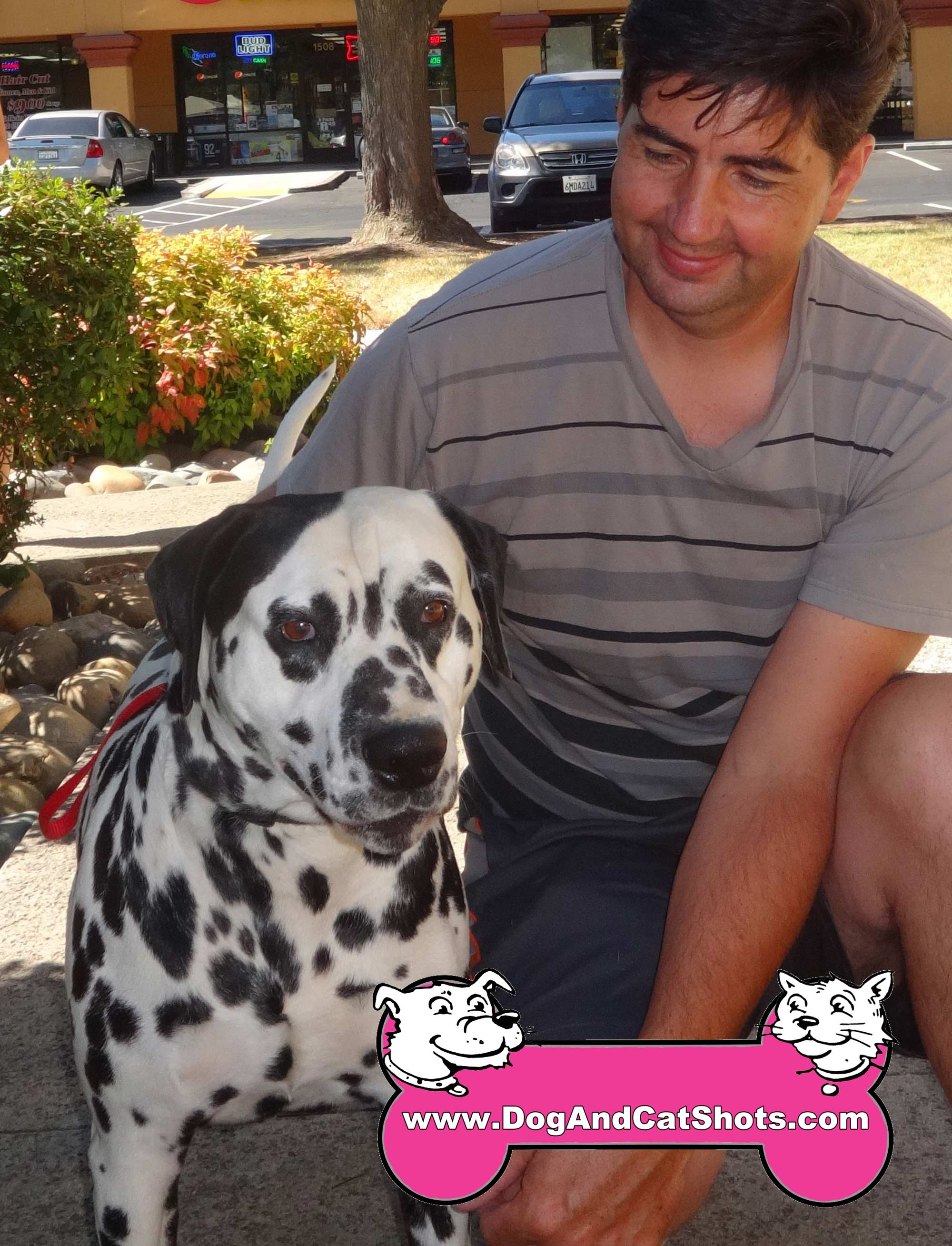 Pongo the Dalmation Got His Shots in Natomas. . .Where's Perdita?
