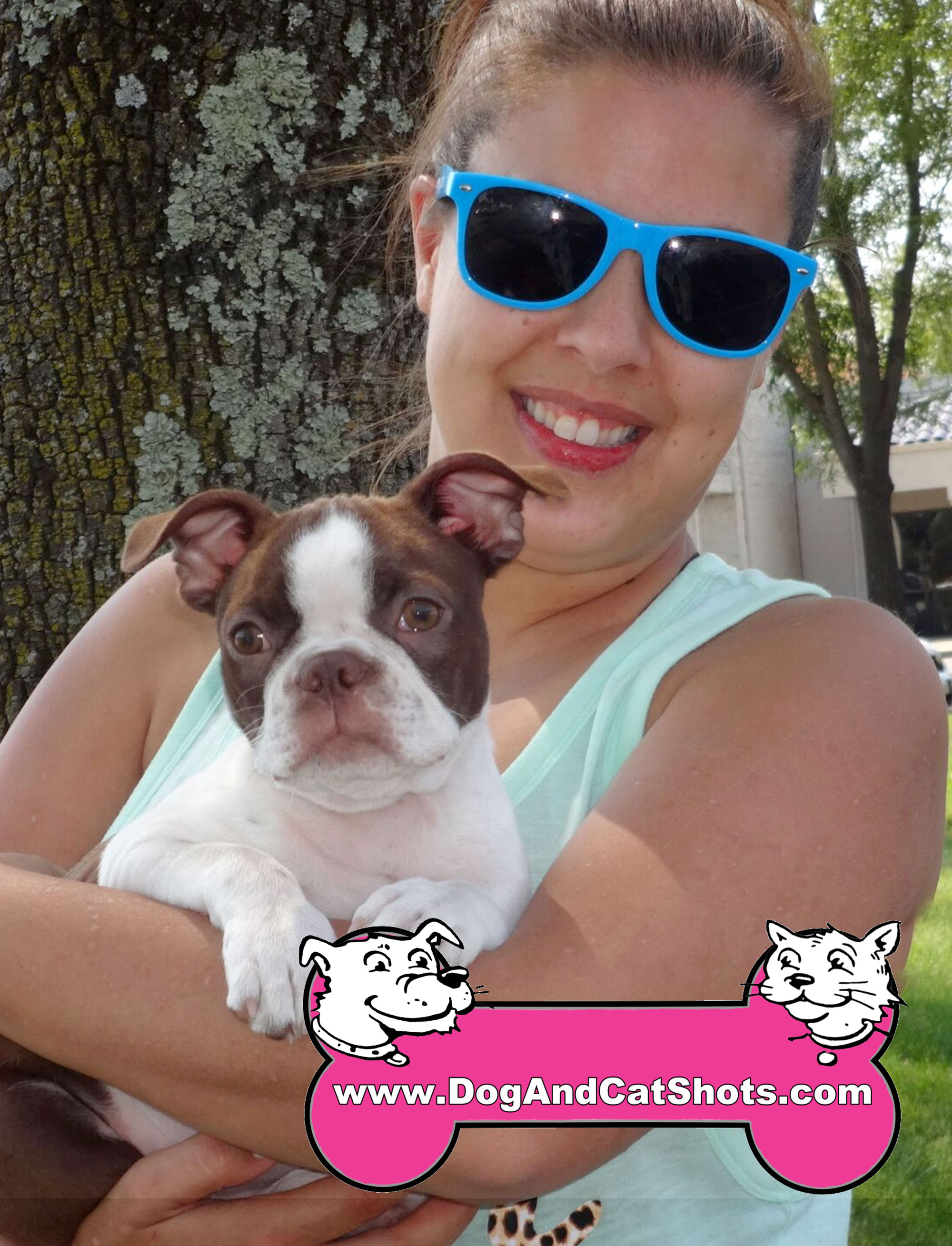 22-Fair-Oaks,-Boston-Terrier,-Buster-dogs-and-cat-shots