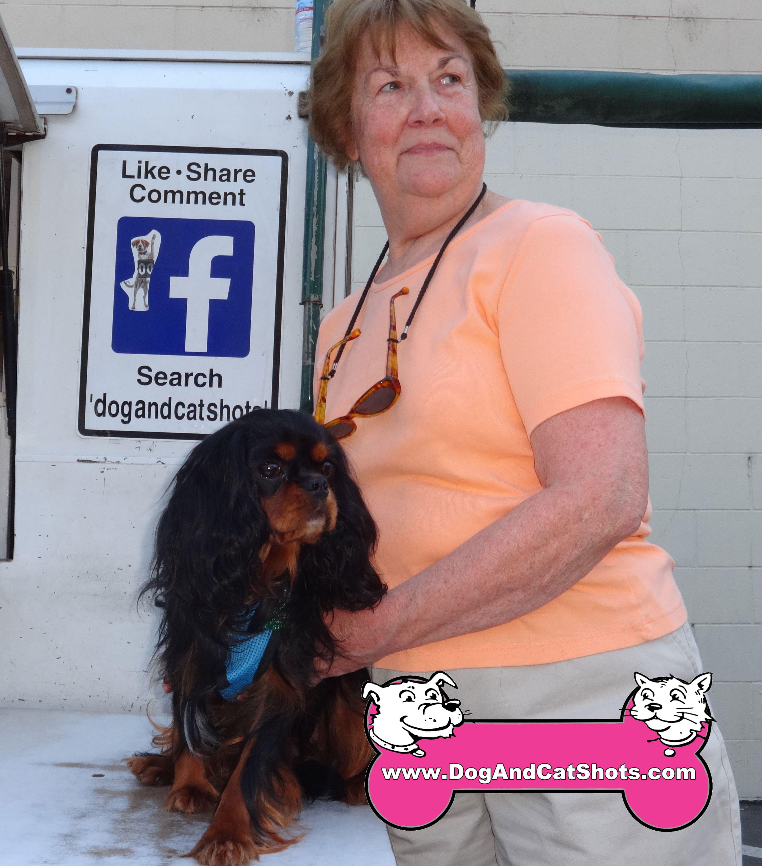 21-Bradshaw,-Cavalier-King-Charles-Spaniel,--Teddy-dog-and-cat-shots
