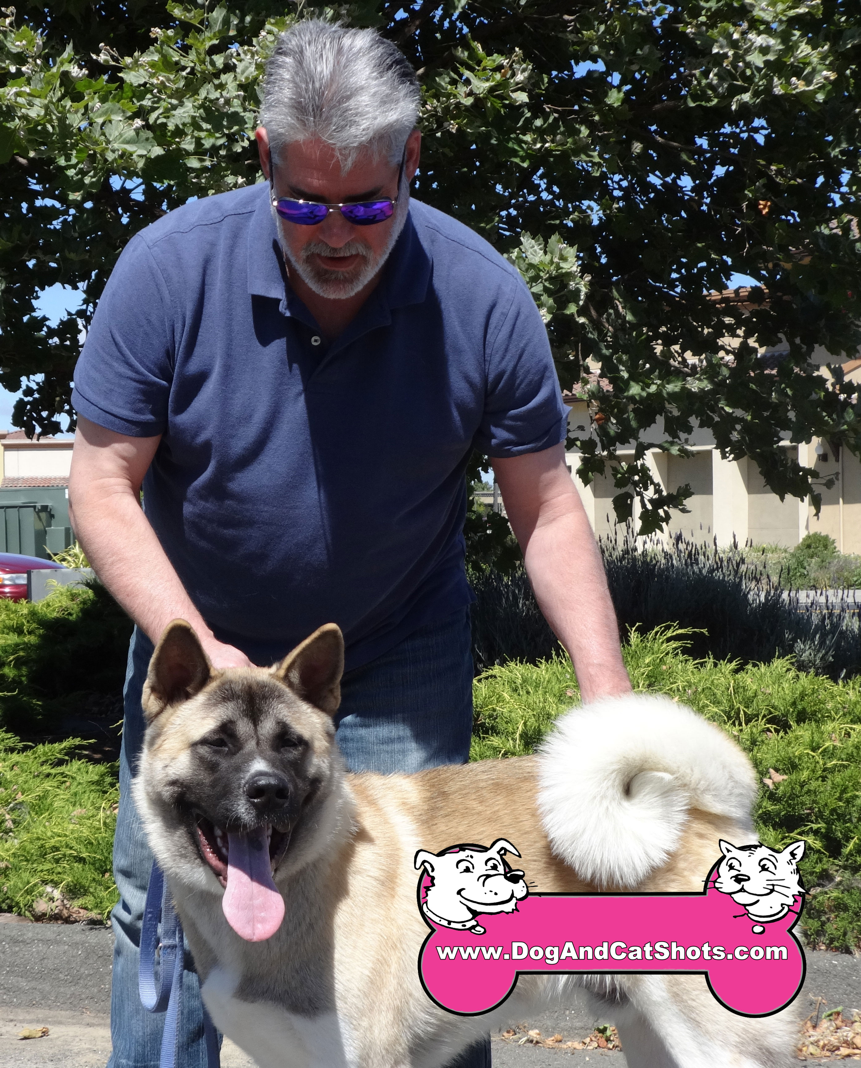 We Saw Yoshi The Akita At Our American Canyon Clinic