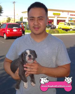 10-merced-american-bully-2-mo-dp