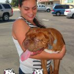 13-atwater-french-mastiff-toulour