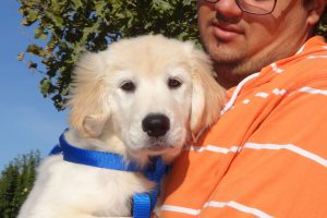 Rayleigh The Golden Retreiver Puppy Visited Us In American Canyon