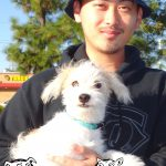 13-south-sac-poodle-pomeranian-border-collie-maxs-friend-kibum