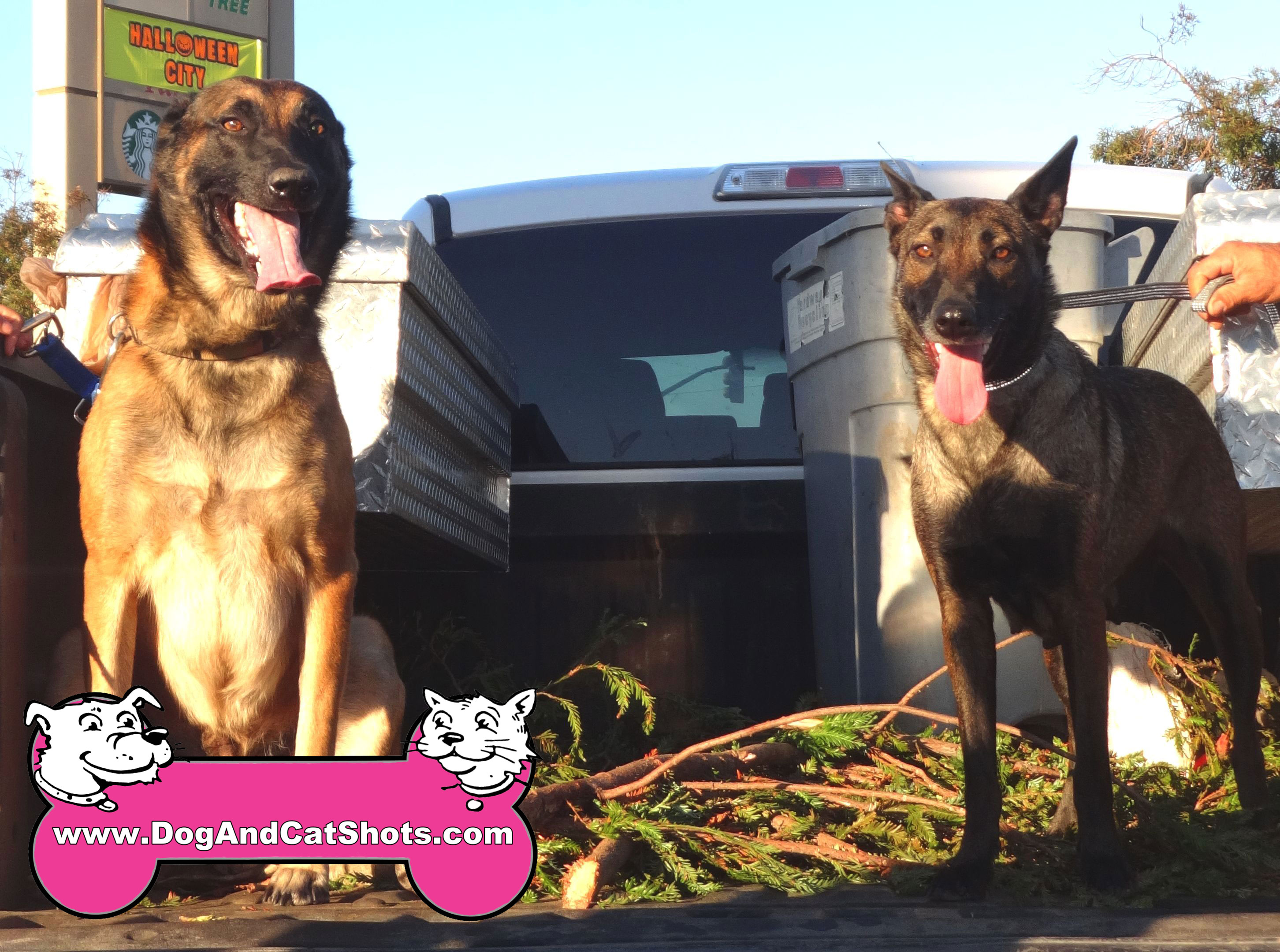 Low Cost Dog and Cat Shots in Northern California Dino ...