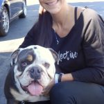 8-brentwood-english-bulldog-hemi