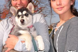 Akira Is A Uoung Husky Pup We Saw At Our Modesto Clinic