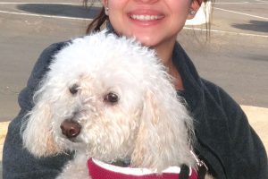 Honey The Miniature Poodle Visited Us In Manteca