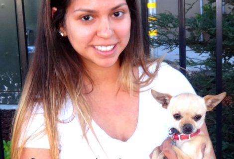 Taco The Chihuahua Visited Us In Turlock