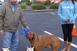 Romeo The Magyar Visla Visited Our Rocklin Location