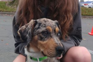 Chipotle the young Catahoula Visited Us In Orangevale