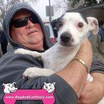 15-woodland-jack-russell-terrier-watson