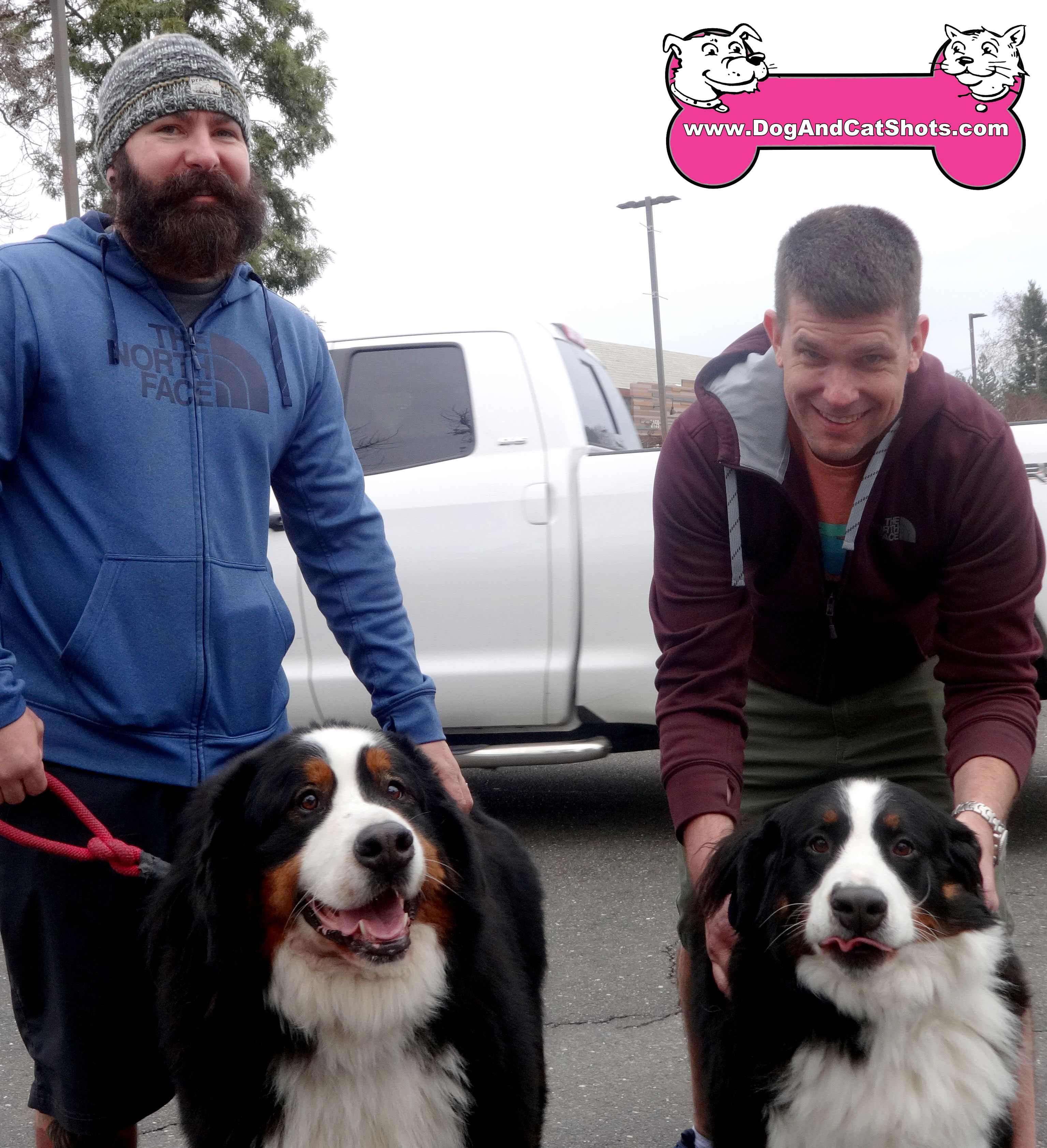 Low Cost Dog And Cat Shots In Northern California Bernese