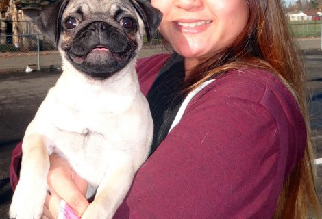 The Happy Pug named Ernie Visited Us In Sutterville