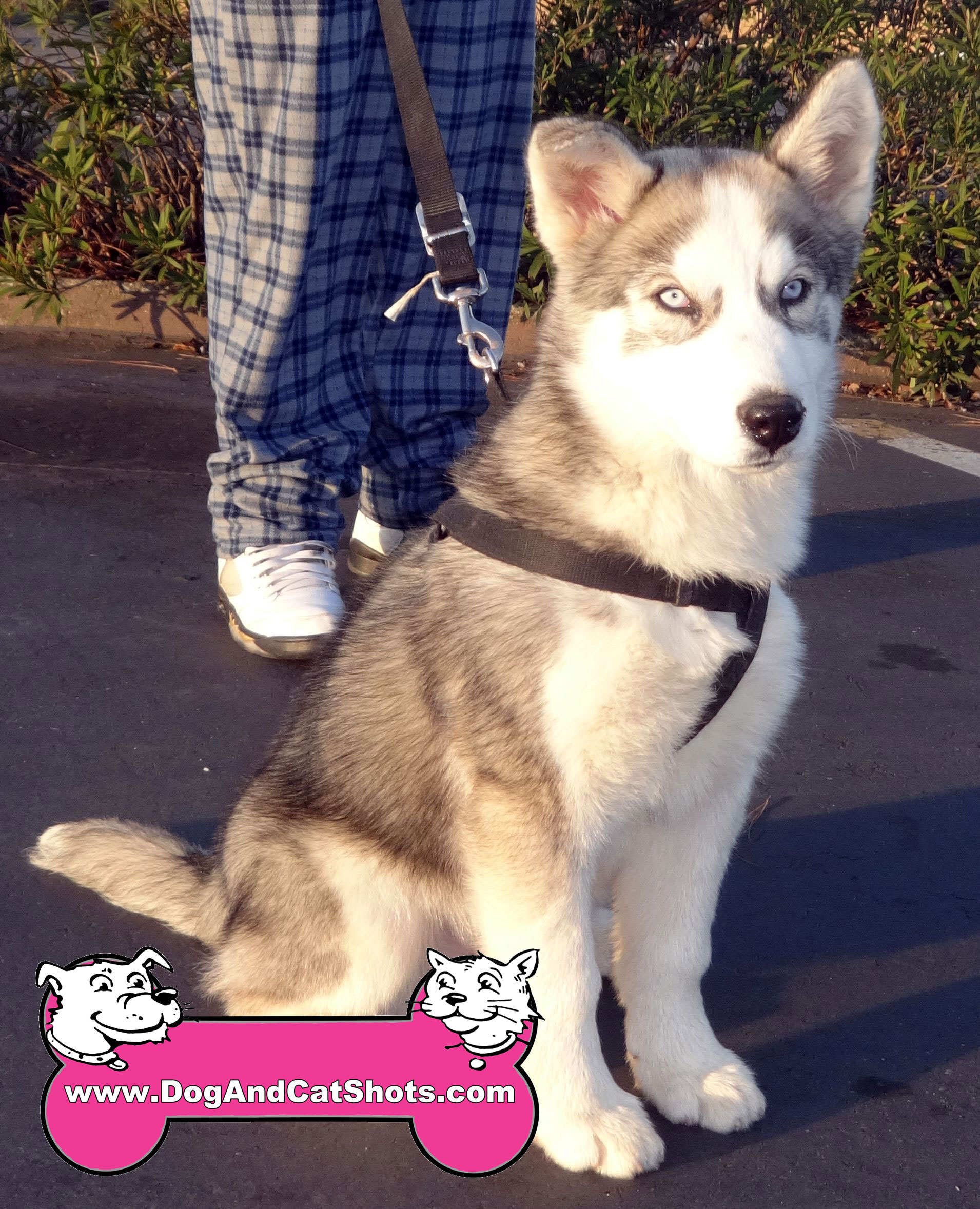 10-south-sacramento-husky-kobe