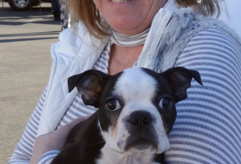 Jackson The Boston Terrier Visited Us In Auburn