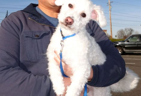 Bruno Is A Mixed Poodle and Maltese We Saw At Our Rancho Cordova Clinic