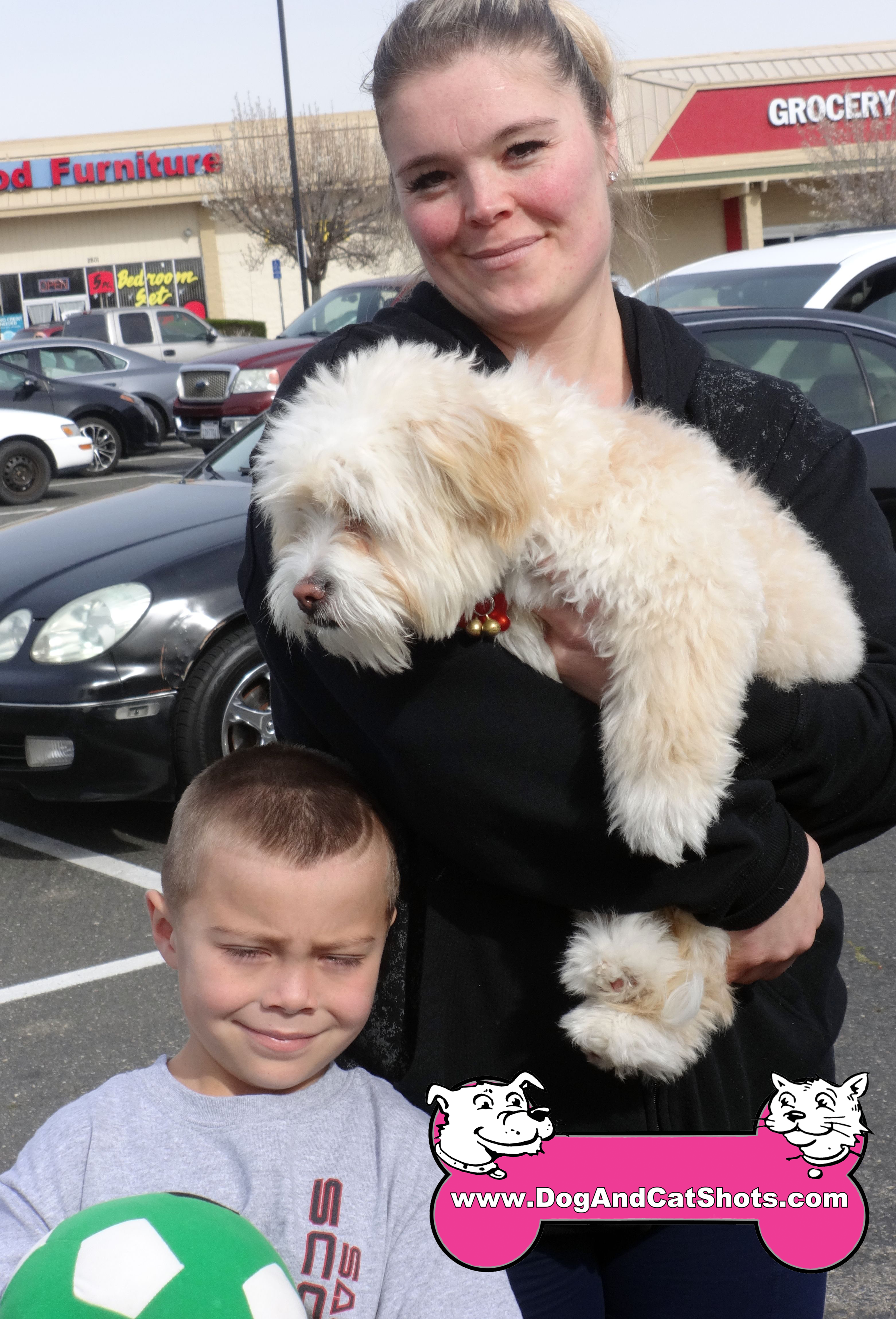 11-rancho-cordova-havanese-cookie