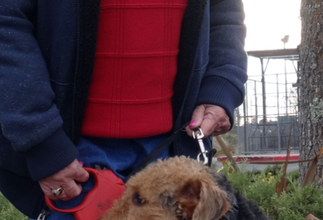 Fergie the Airedale Visited Us In Placerville