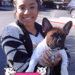 17-natomas-french-bulldog-mozart
