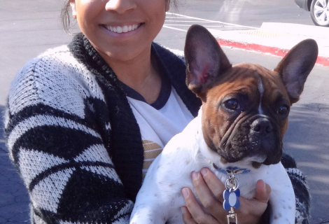 Mozart Is a French Bulldog Who Visited Us In Sacramento