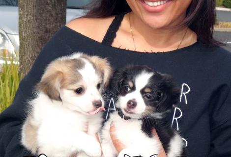 We Saw Shih-Tzu Mix Pups Named Penny & George in Rocklin/Roseville