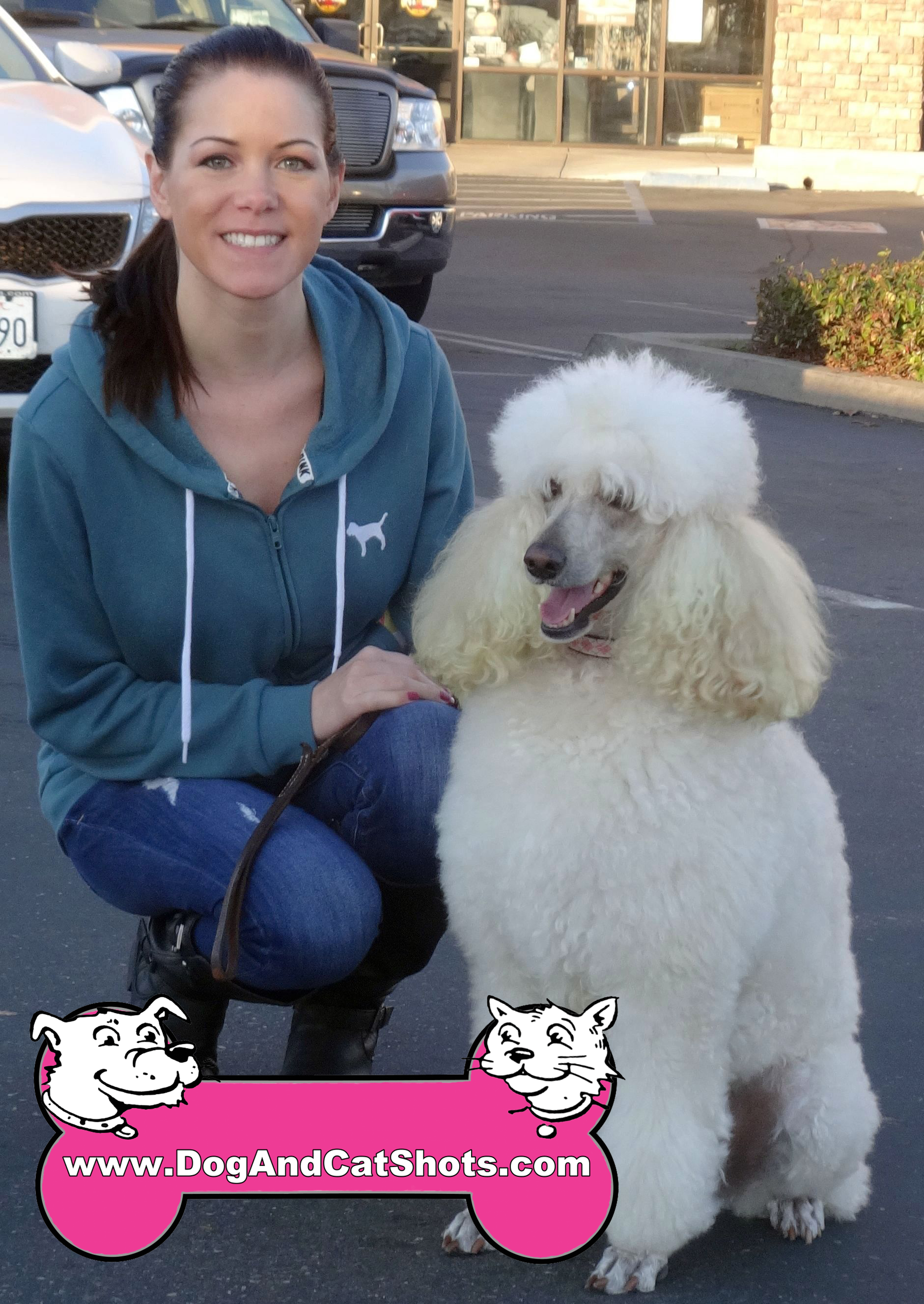 Dixie tHE Standard Poodle Visited Us In Galt