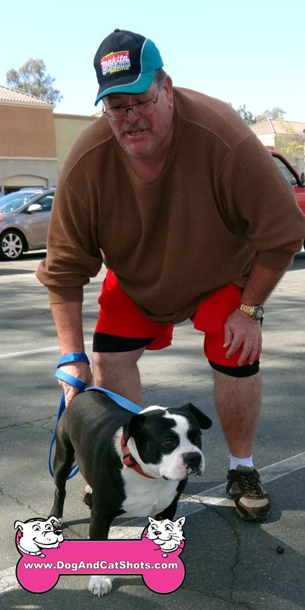 12-orangevale-boston-terrier-pit-bull-bandit