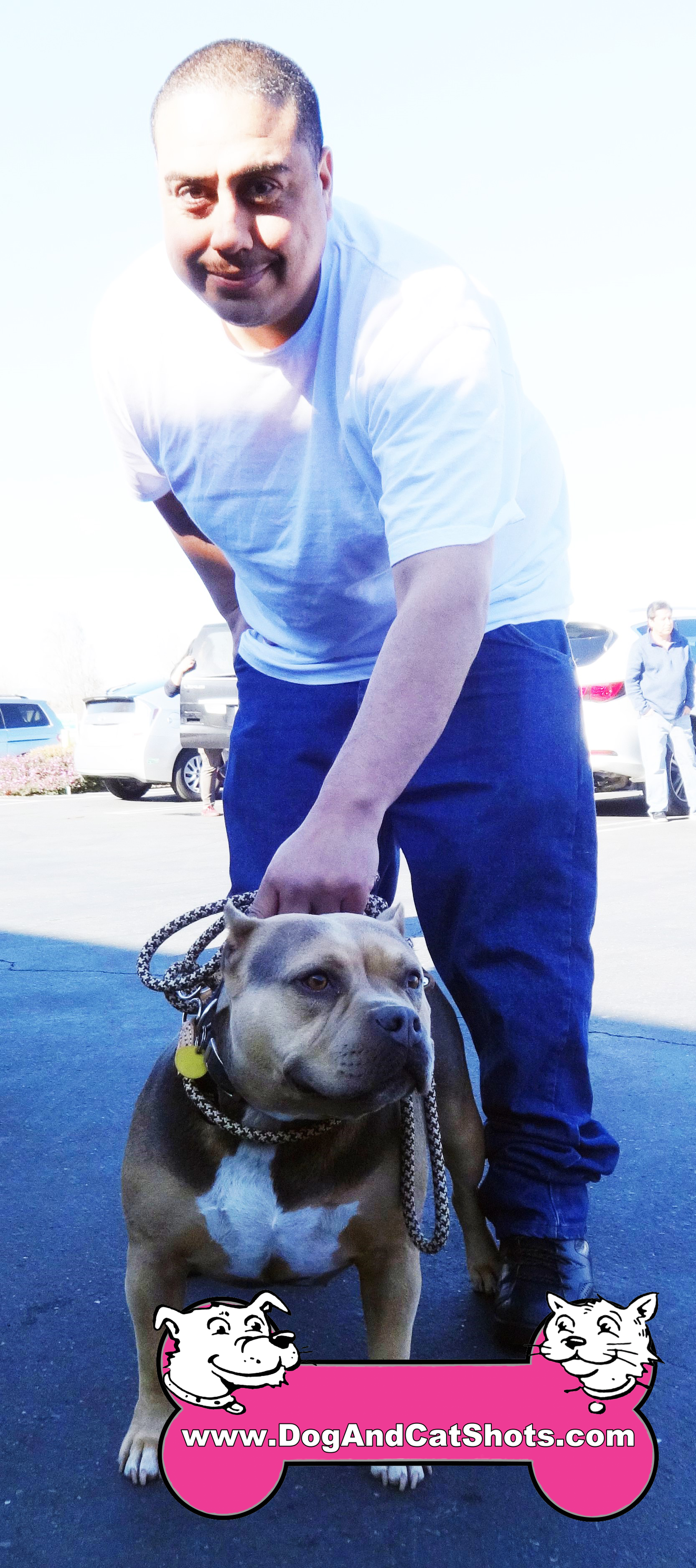 Bella The American Bully Visited Our Antioch Clinic