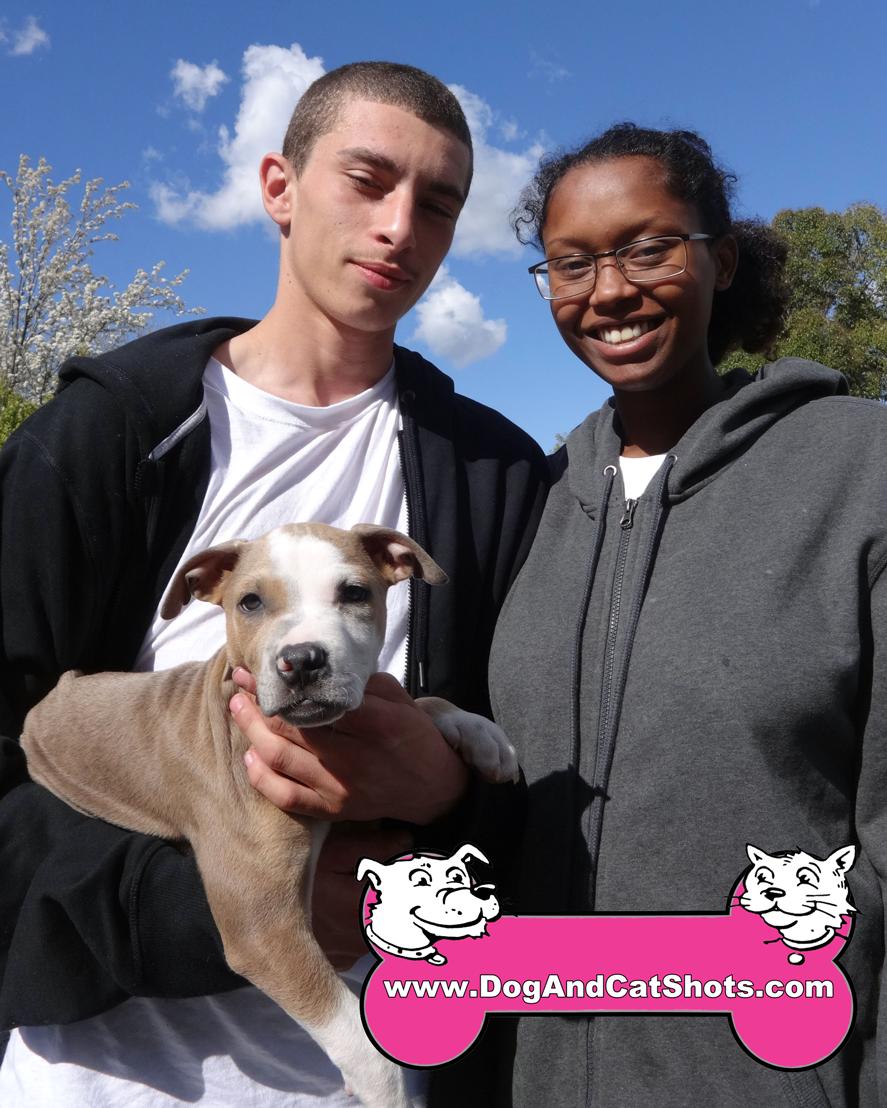 Taz The Pitbull Visited Our Rancho Cordova Clinic