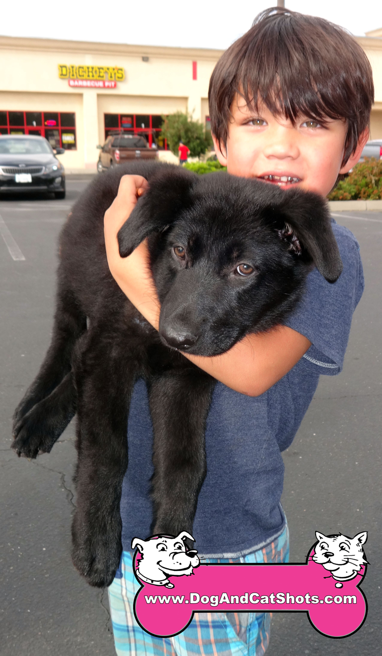 Stormy The Lab Mix VisitedOur Merced Clinic