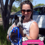 18-rocklin-queensland-heeler-blue