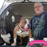 20-american-canyon-vallejo-pocket-american-bully-american-bully-lola-black-chewy-brown